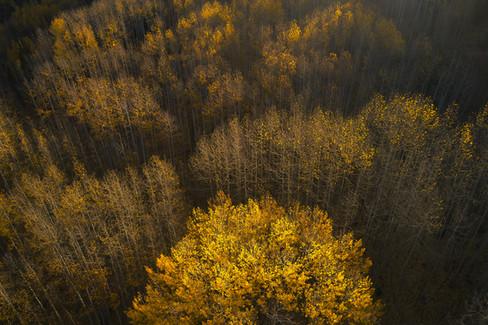 Colorado Fall Colors 0 142.jpg
