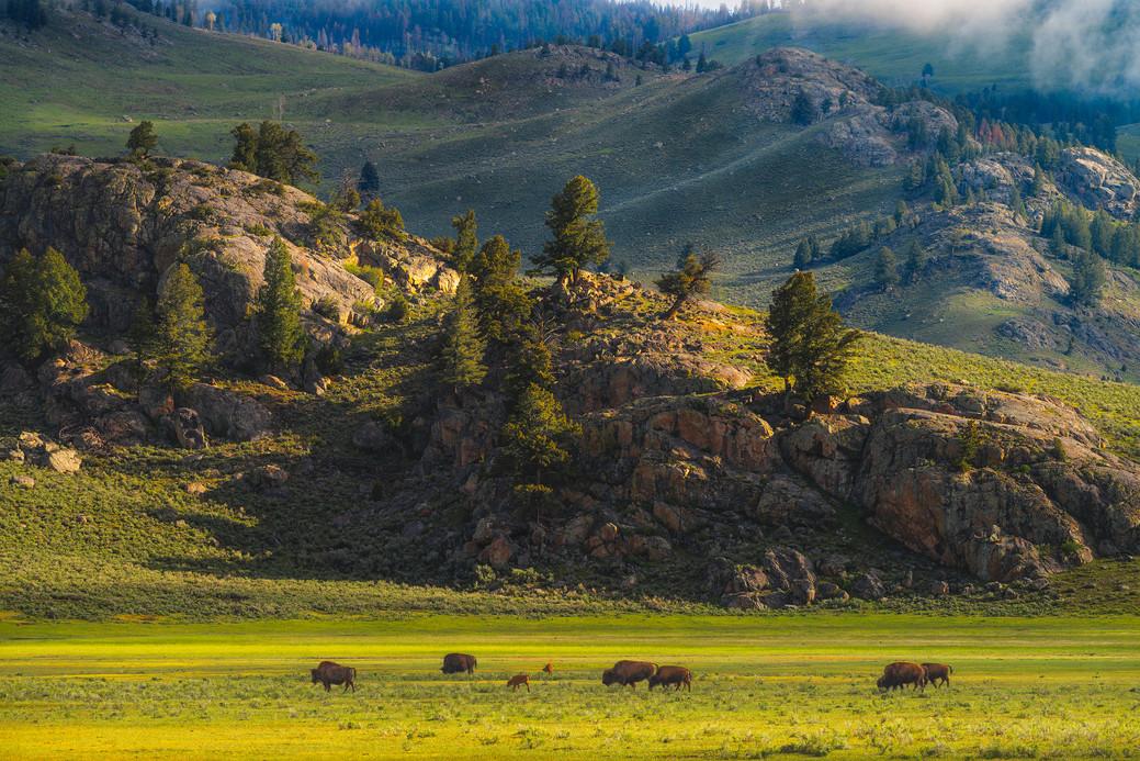 Roming Wyoming