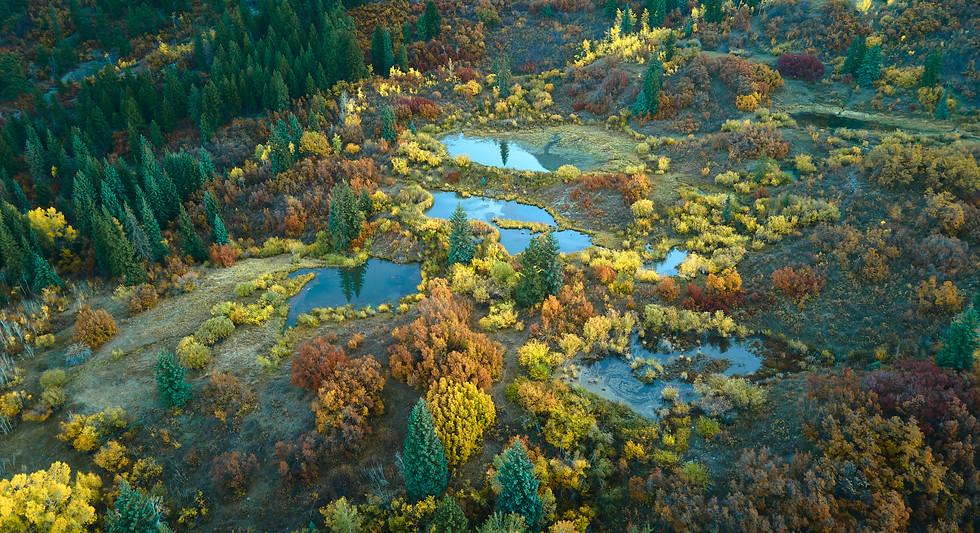 Colorado Fall Colors 0 12.jpg