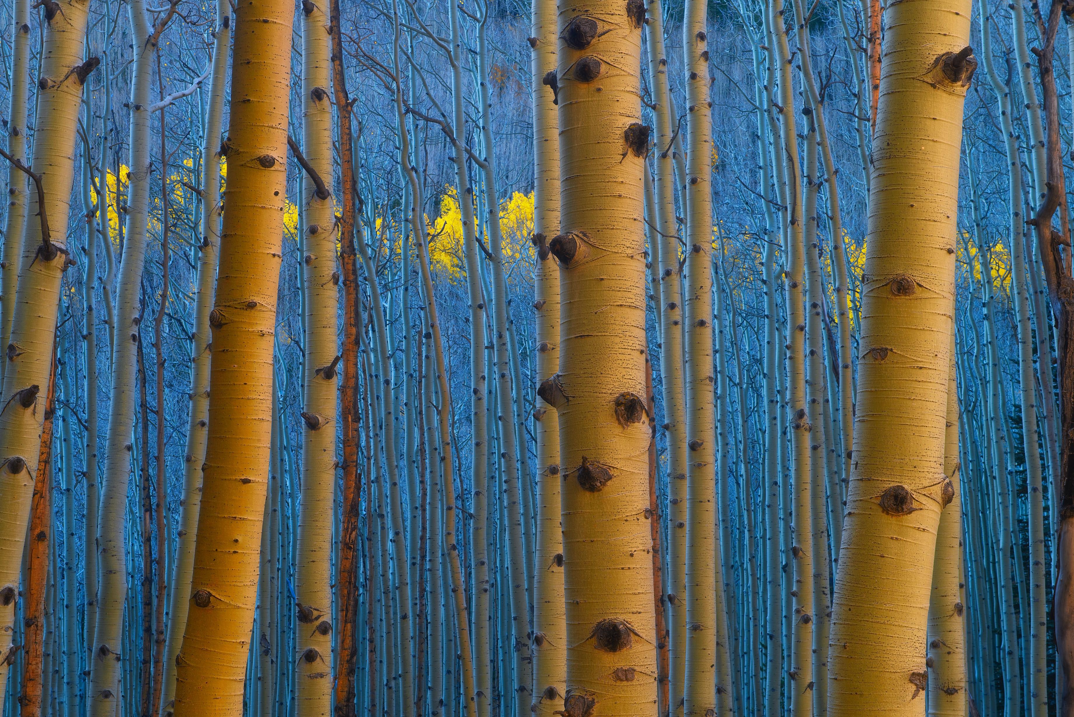 Colorado Fall Colors ~ Ridgway Single