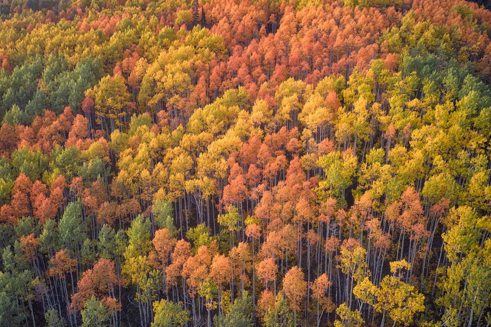 Colorado Fall Colors 4.jpg