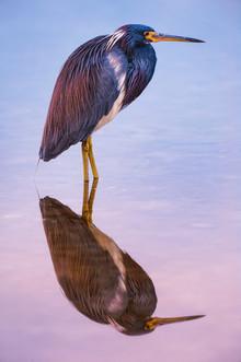 Feathered Fresco