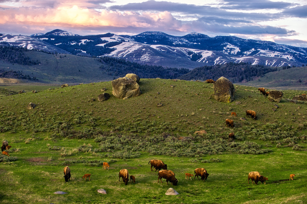 Boulders and Bison