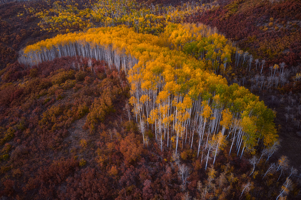 Colorado Fall Colors 2.jpg