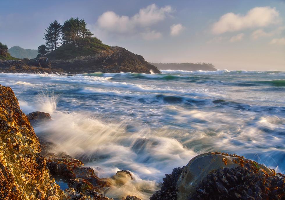 Oceanic Joy