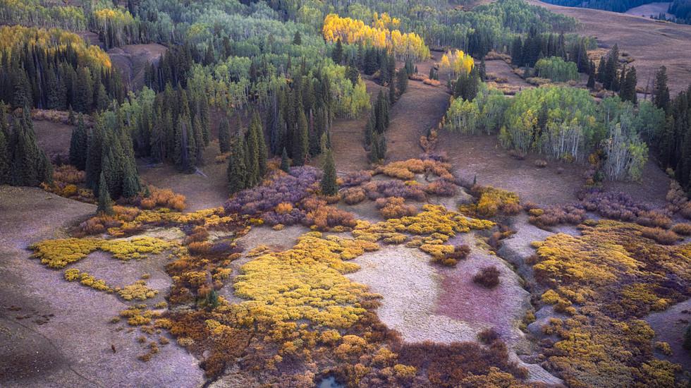 Meadow Mosaic