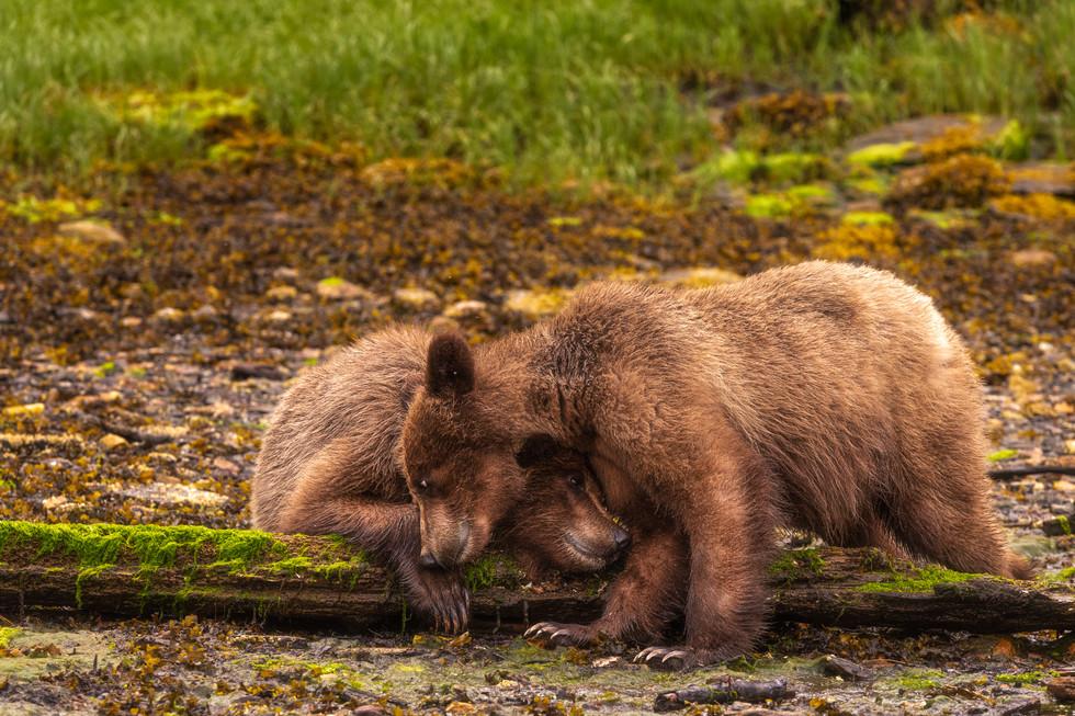 A Bearly Bromance