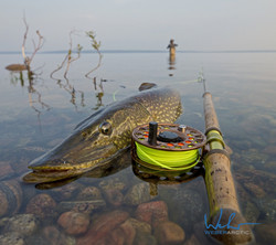 spey fishing for Northern pike