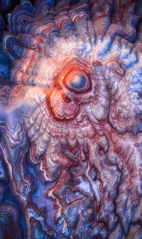 Embryonic Earth