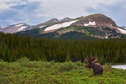 Moose Mountain Meadows