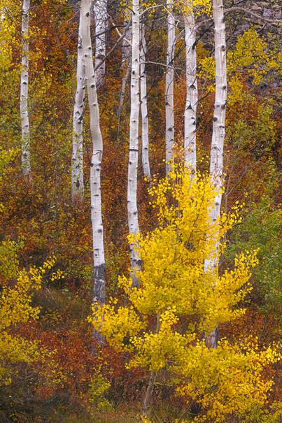 Colorado Fall Colors 7.jpg
