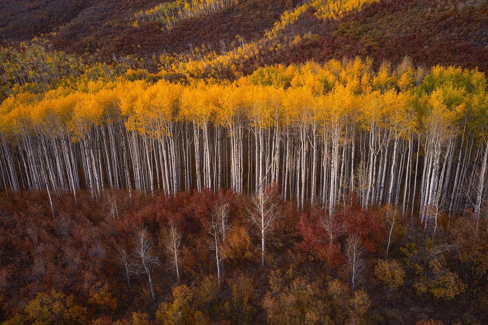 Colorado Fall Colors 0 148 1.jpg