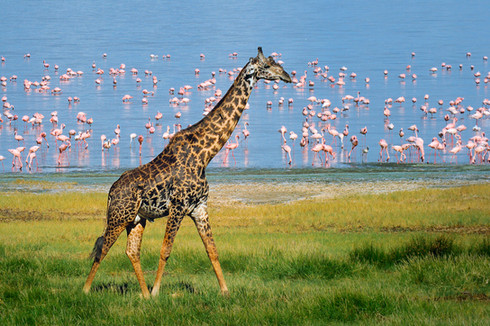 Flamingo Beach Stroll
