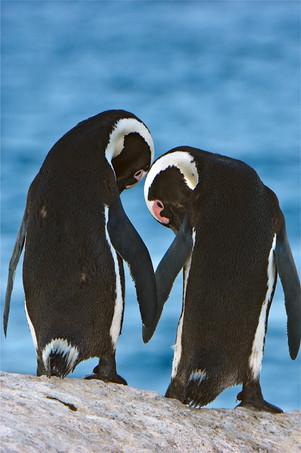 Flipper Friends