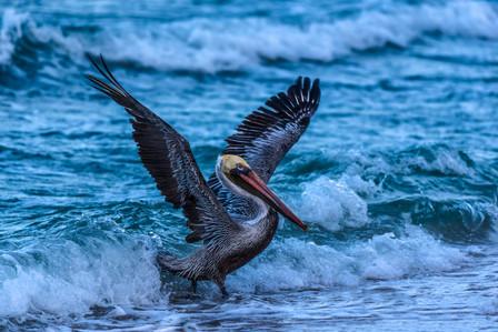 Surfer Bird
