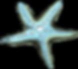 """<img src=""""sea_star.png"""" alt=""""sea_star"""">"""