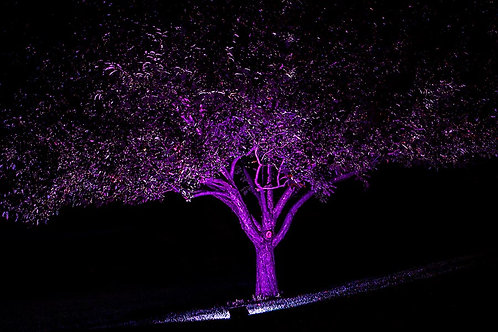 RGB Outdoor Flood Light 50w