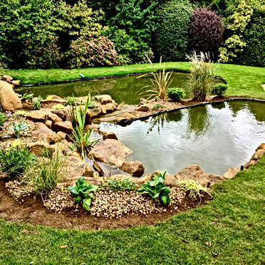Oxted Suburban Pond.jpeg