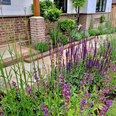 Salvia, Verbena, Hebe, Lavender