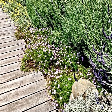Naturalised Edging Growth Sussex Coastal