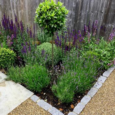 Front Garden Design Planting