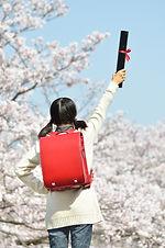 Japanese elementary school student(cherr