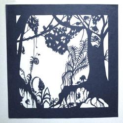 Habitat Series: Forest Raccoons