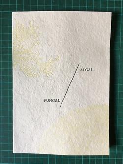 Algal/Fungal Cover