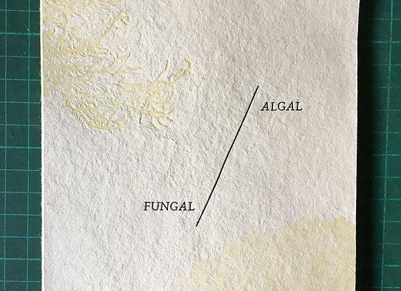 Algal/Fungal Deluxe