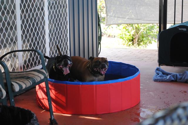 kids in their pool