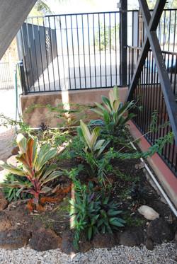 My baby Garden