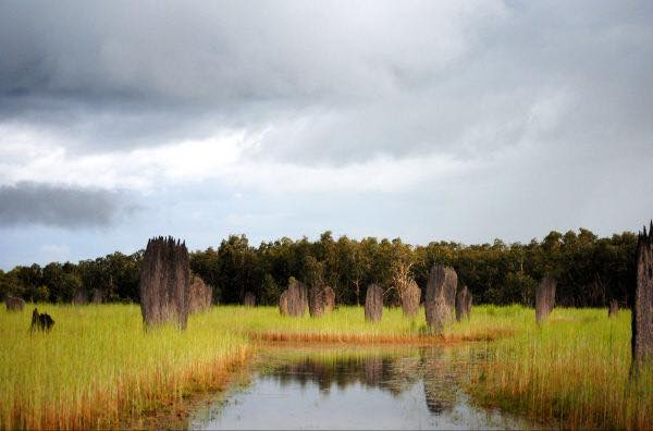 Termite Mounds in the wet