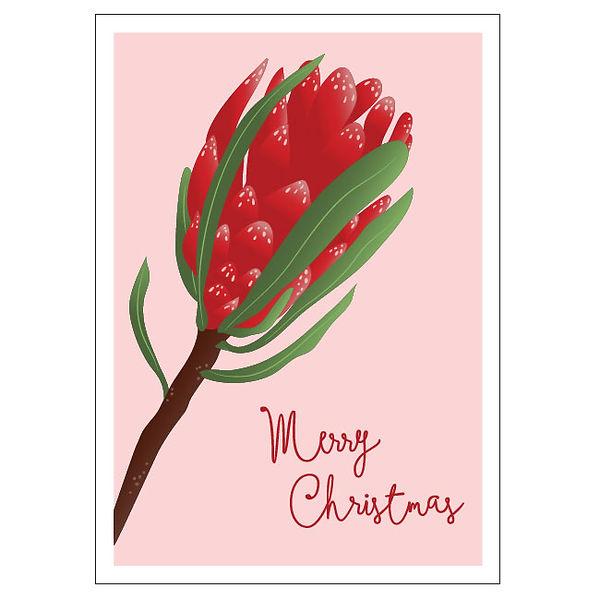 Christmas-Protea.jpg