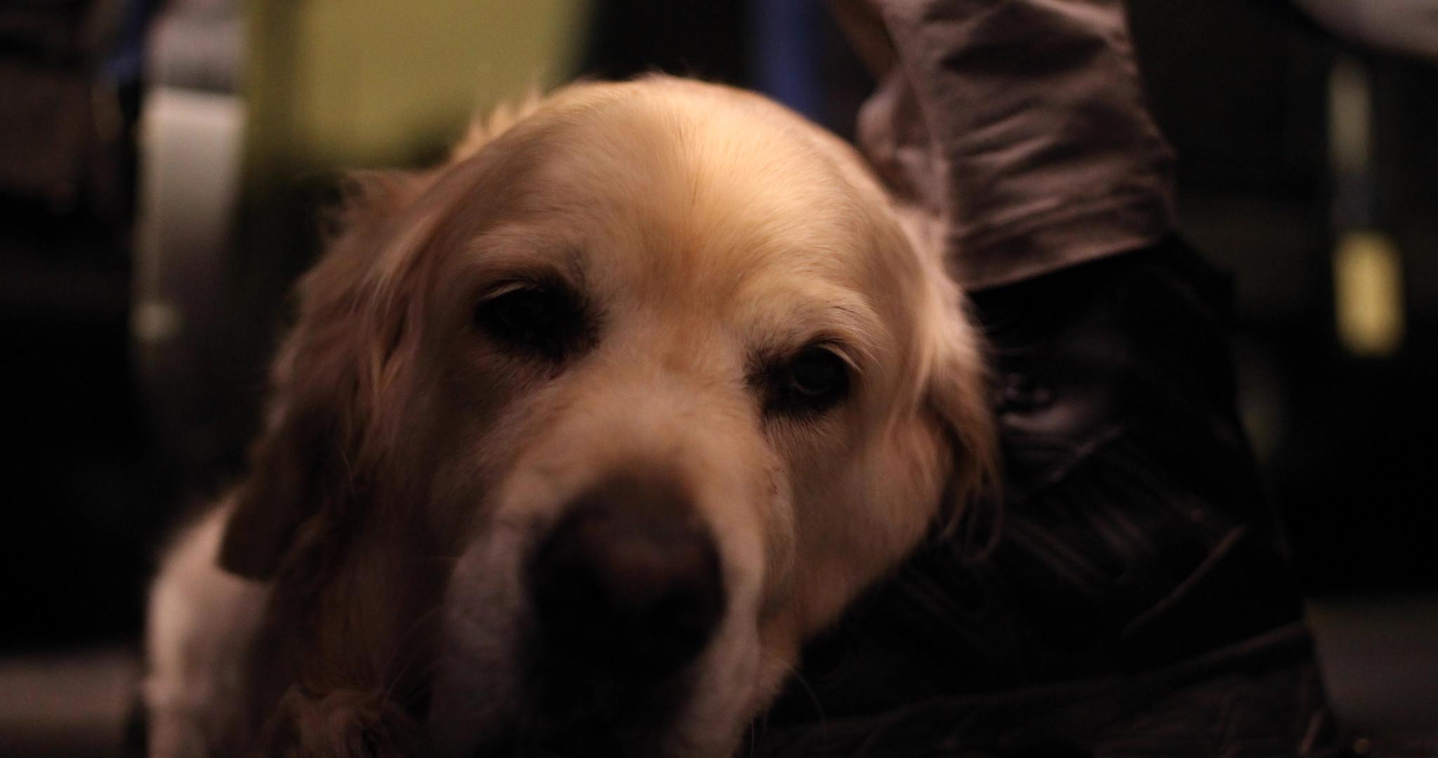 DOG FACE.jpeg
