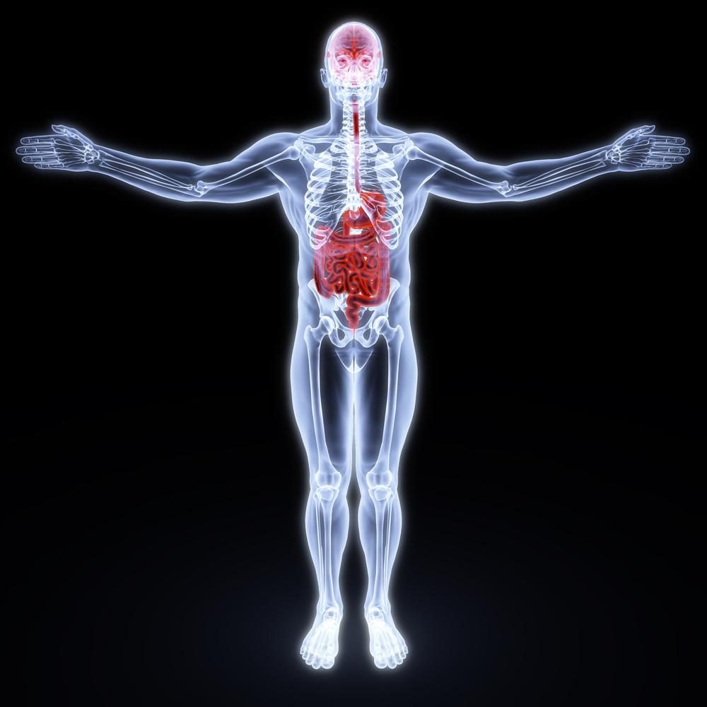 Gut - brain axis