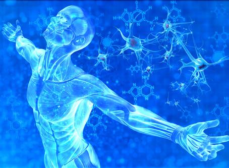 How do Stem Cells know where to repair?