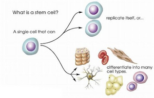 Stem Cell actions