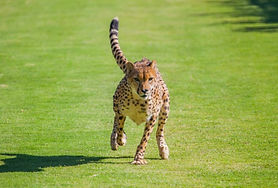 national_geographic_animals_motion.jpg