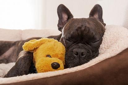 relaxed-dog.jpg