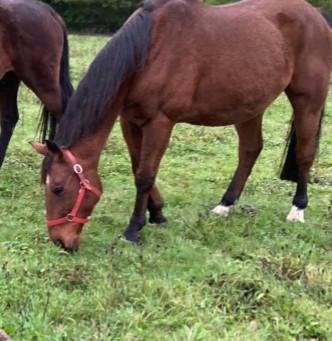 Susi est devenue un tout autre cheval.