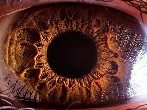 Saúde dos olhos: doenças e cuidados
