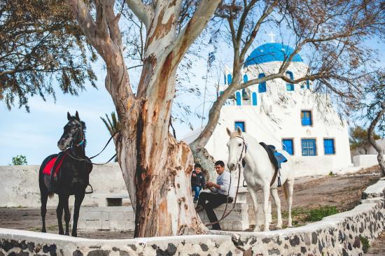 santorini-horse-riding 4