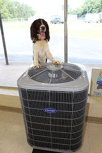 Dogs. Puppies. Carrier. AC Unit. Ac Repairs. Heating and air conditioning.