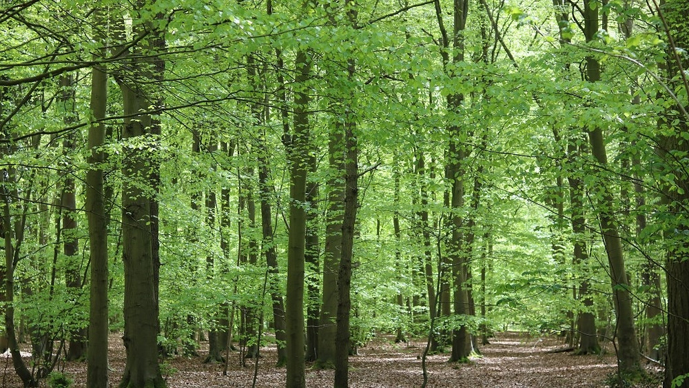 The Trees of Thetford Forest