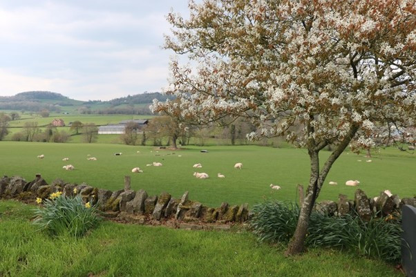 The Farmland Surrounding Orcop Church