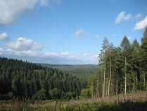 Beechenhurst Trail