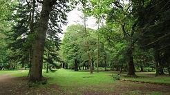 Cyril Hart Arboretum