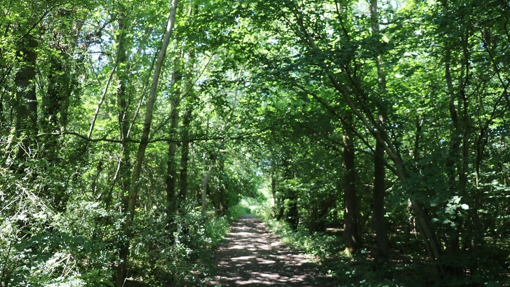 Ravensroost Wood