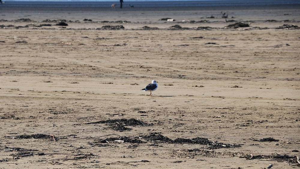 Just a Gull For Company