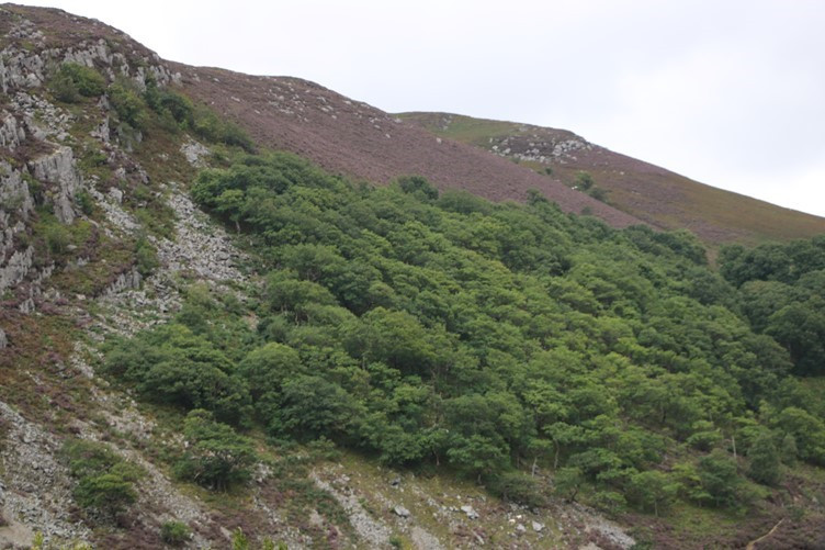 The heather on the hills above